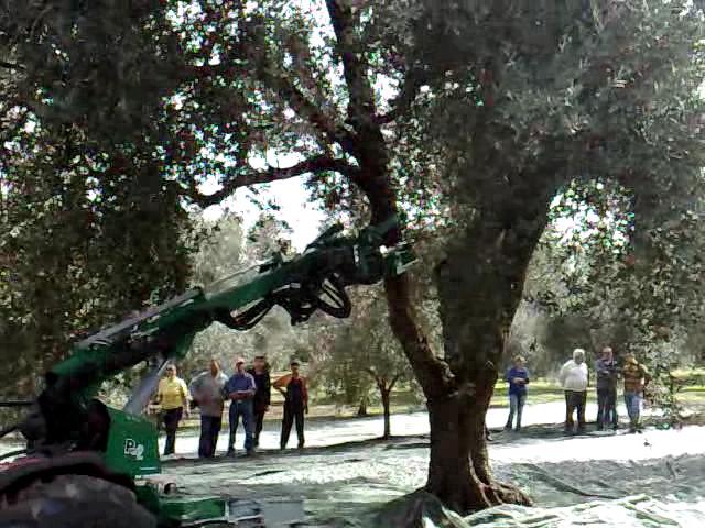 Scuotitore Per Olive Raccolta Meccanica Olive Pettini
