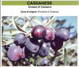 cassanese_p.jpg