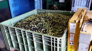 Contenitori per trasporto olive, casse, bins e ceste