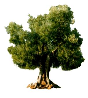 Calendario Trattamenti Olivo Biologico.Calendario Dei Trattamenti Consentiti In Agricoltura