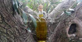 Vendo olio di oliva – vendita olio extravergine