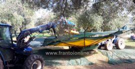Scuotitore per olive, raccolta meccanica olive, pettini vibranti e brucatori