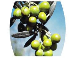 olive-verdi