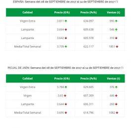 Spagna: 485.000 tonnellate di olio di oliva in giacenza