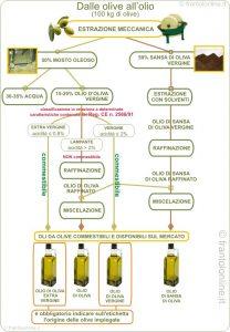 estrazione dell'olio di oliva