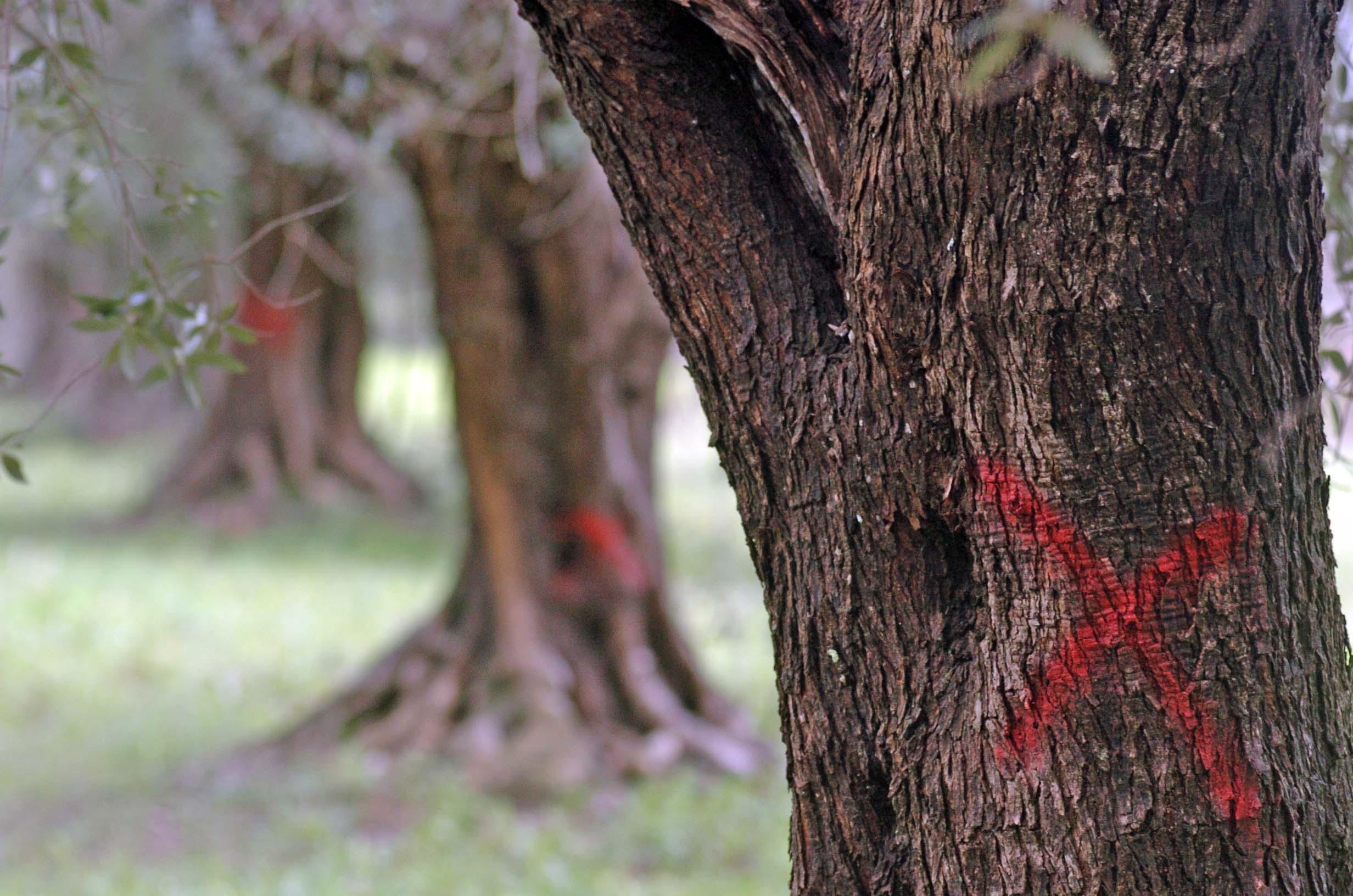 XYLELLA: Fondo Emergenza Fitosanitaria