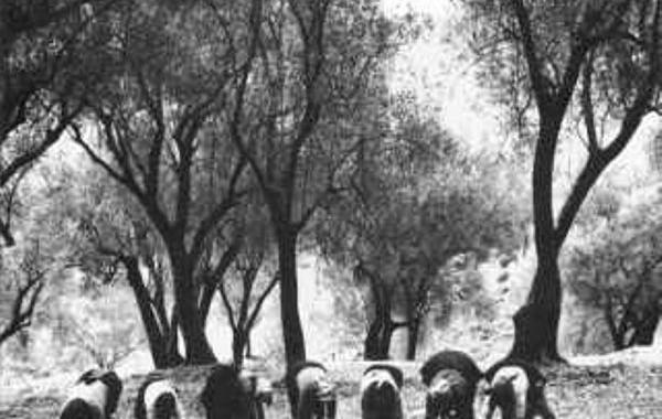 Foto d'epoca – Antichi frantoi