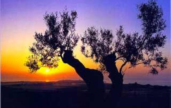 Ulivi e tramonti