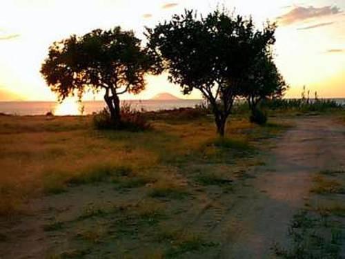 ulivi-tramonti-loc-tropea2