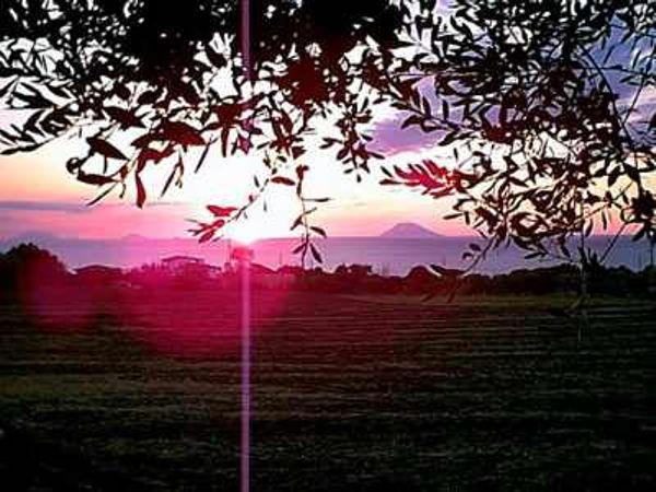 ulivi-tramonti-loc-tropea3