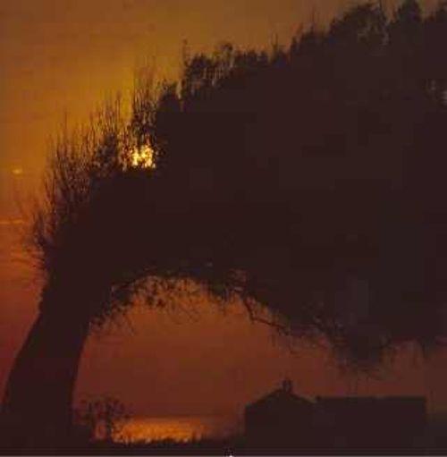 ulivi-tramonti-vento