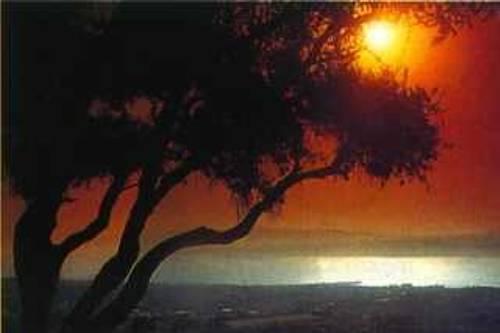 ulivi-tramonti