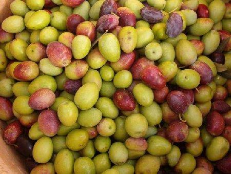 olive-schir