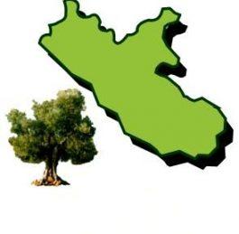 L'oro giallo del Lazio, un corso gratuito sull'olio di oliva