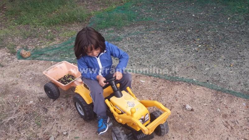 trattore-gregorio