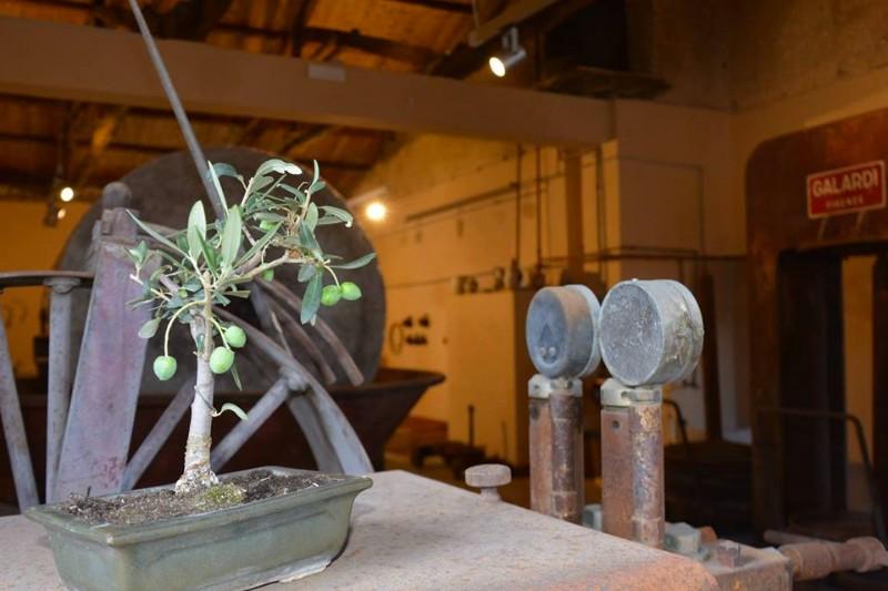 antichi-frantoi-olivo