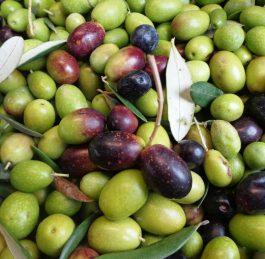L'altezza è mezza bellezza / qualità per l'olio di oliva.