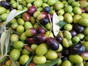 olive olio EVOO
