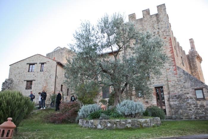 castelli-umbri-ulivi