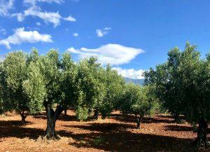 micro elementi olivo