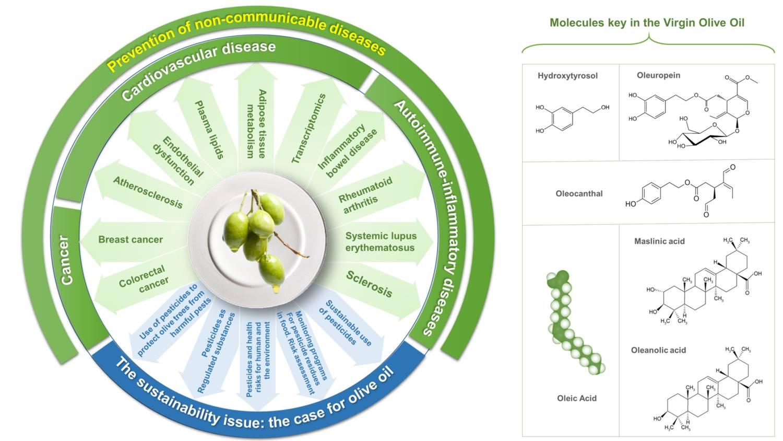 Prove scientifiche sostanziali a supporto dei benefici per la salute dell'olio extravergine di oliva