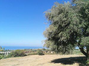 Campagna Olearia 2019-2020: Previsione Produzione Olio di Oliva in Italia e prezzi olio.