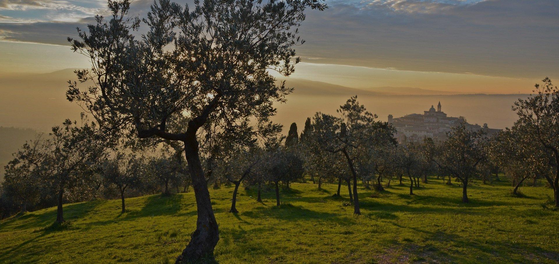 Convegno su fascia olivetata pedemontana Assisi-Foligno-Spoleto